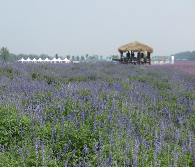 2010-8-8 蓝调庄园
