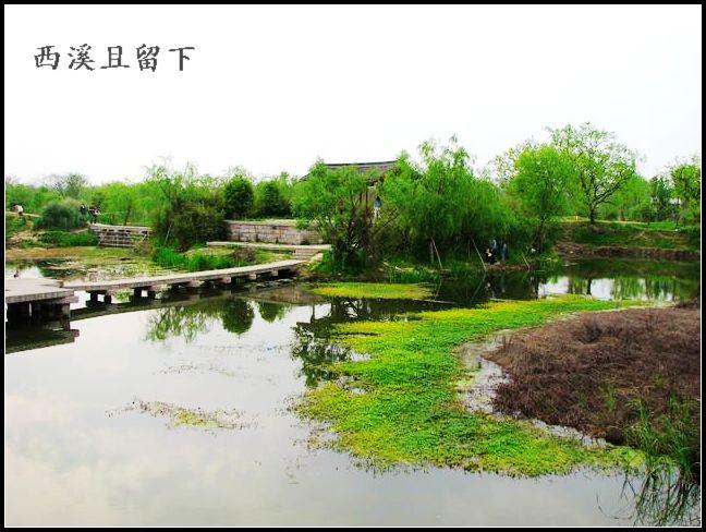 返乡记---西溪,小白,绿堤