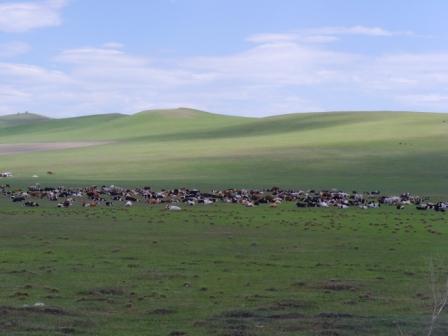 美丽的景色在路上——呼伦贝尔草原攻略