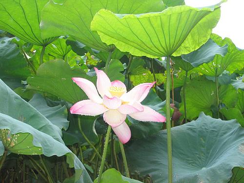 黄岩的绿水,杭州的花