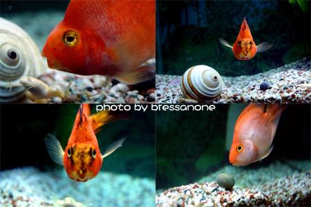 添新鱼了,可爱的血鹦鹉和漂亮的斑马燕