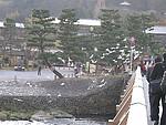 美丽的京都之岚山
