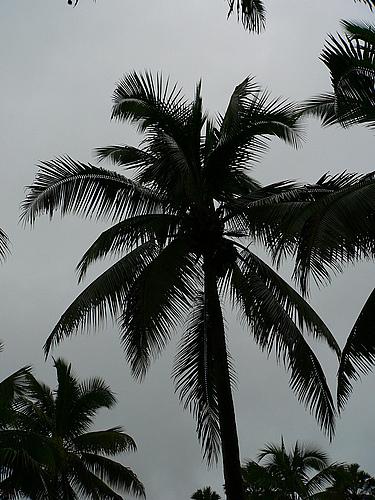 2008年8月普洱、西双版纳深度游(第三部分)