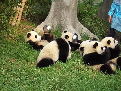 熊猫熊猫~~~~