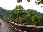 新加坡旅游三