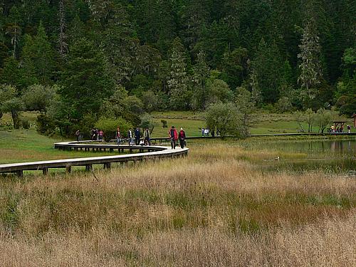 2008年国庆黄金周香格里拉、丽江之行(第二部分)——普达措国家公园