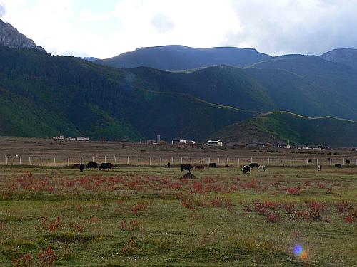 2008年国庆黄金周香格里拉、丽江之行(第三部分)——纳帕海(依拉草原)之旅