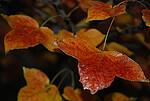 枫香谷 ——红叶