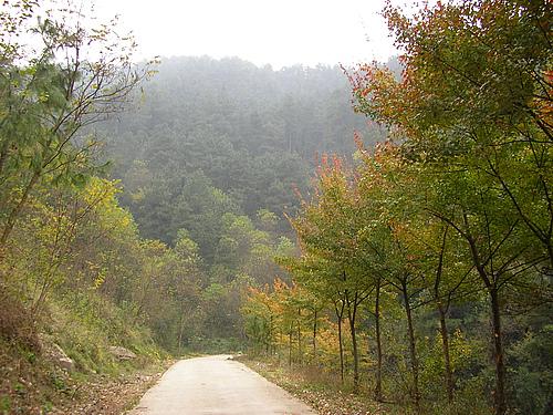 沼山森林公园
