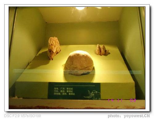 甘肃历史博物馆 :<一>距今6500万—1万年 古生物化石