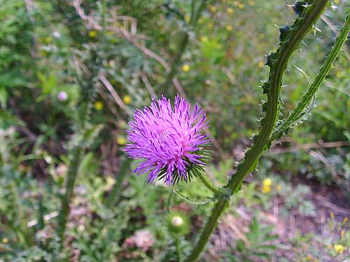 曾经拍到的不知名紫色花