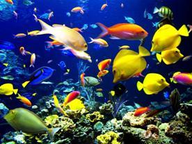 09年最新三亚自助游攻略之4——潜水