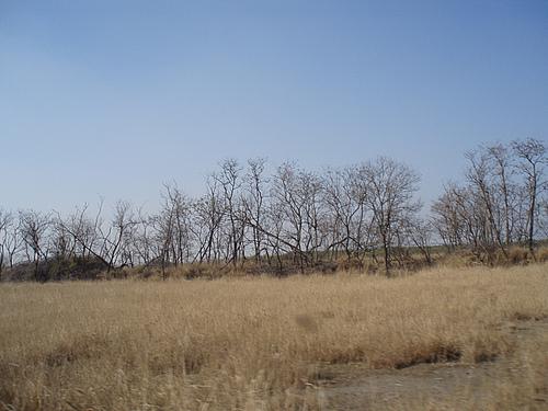 冬游大丰麋鹿园