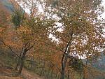 柳城的红叶