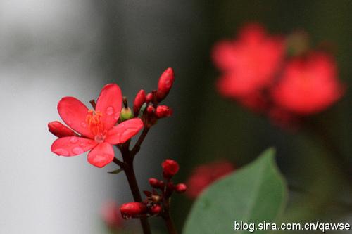 转贴漂亮小红花,恳请识者赐芳名【转】