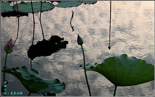 荷塘夕照:天光云影共徘徊