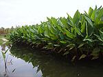 昆明五甲湿地