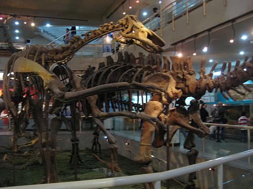 古动物博物馆
