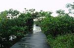 广东珠海淇澳岛红树林保护区