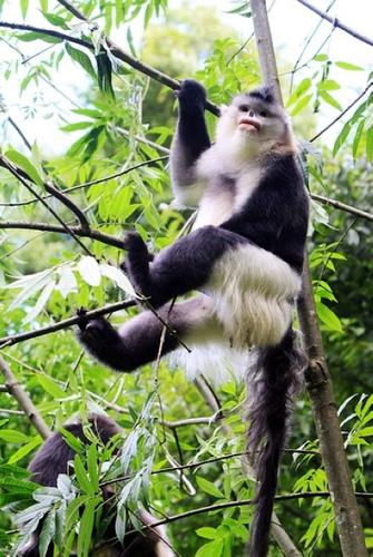 丽江维西金丝猴之旅