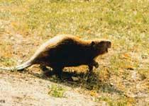 布尔根河狸保护区