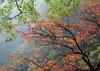 鲁迅国家森林公园
