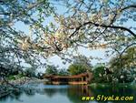 西湖游日赏桂夜赏月